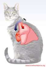 know-heartworm-cat_opt-150-w-220-h
