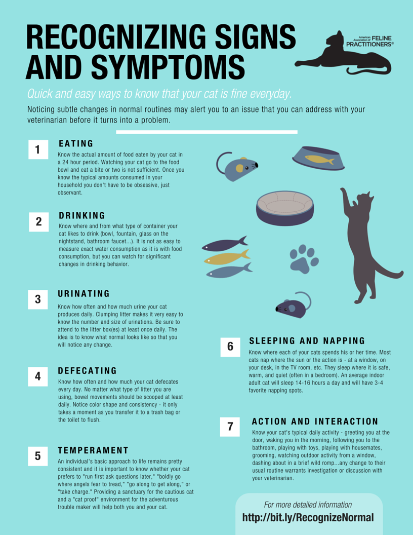 signs and symptoms flyer 1 the cat community