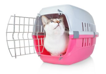 White cat in pink carrier