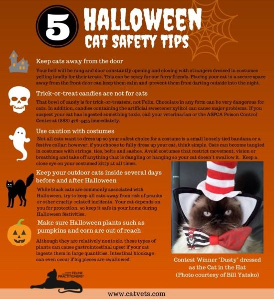 5 Halloween Cat Safety Tips