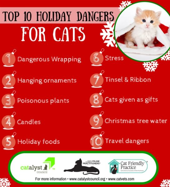 Top 10 Holiday Dangers For Cats