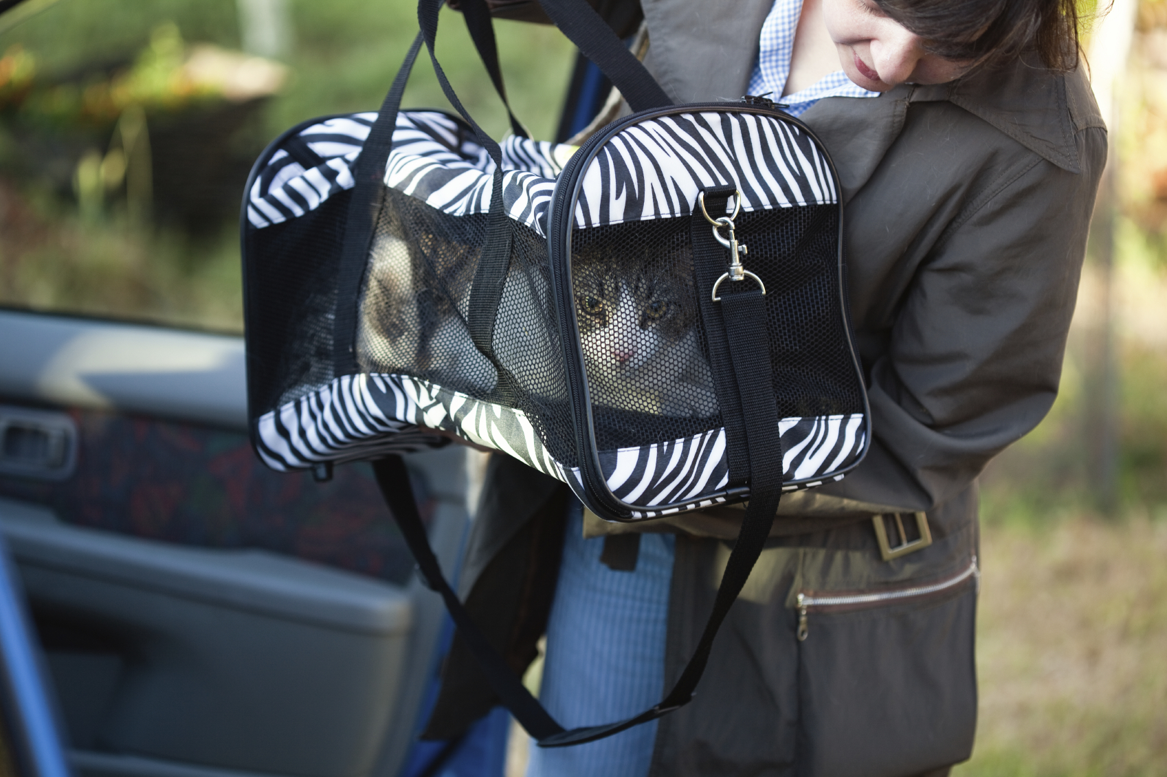 Cat in zebra carrier