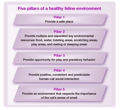 Five pillars of a healthy feline environment