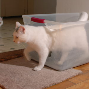 in general bigger is better and many commercial litter boxes are too small - Litter Boxes