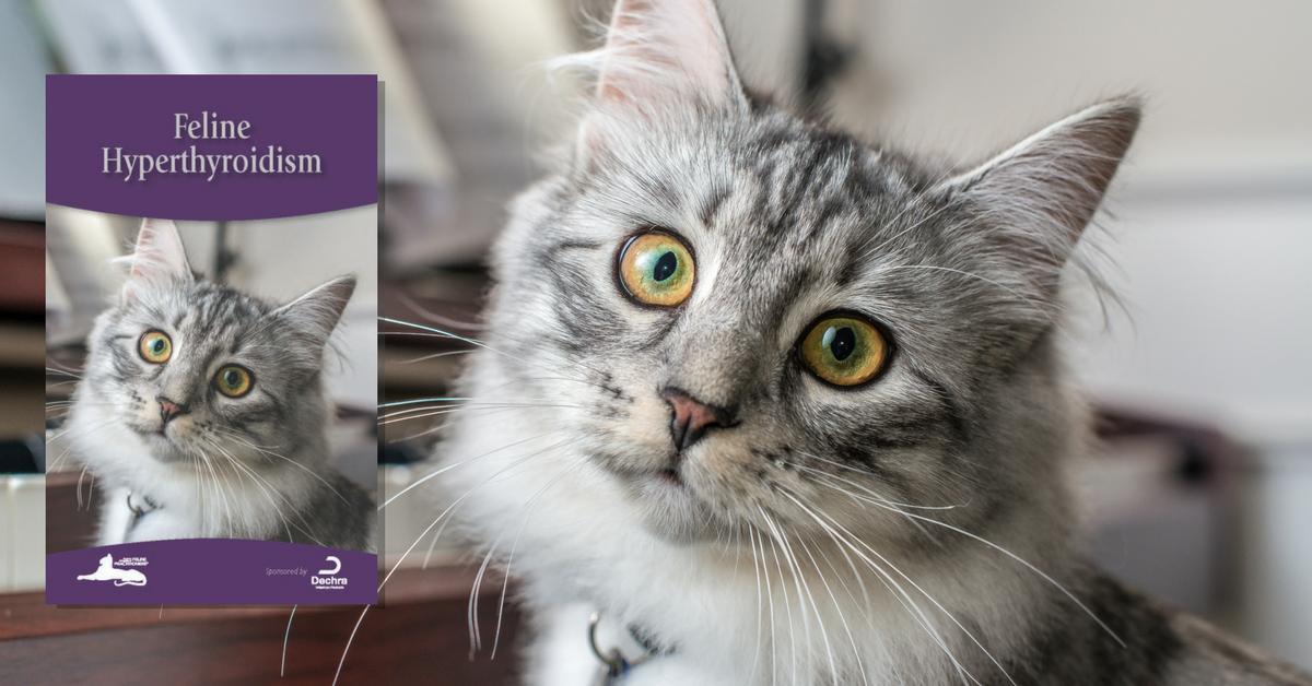 Feline Hyperthyroidism Cat Friendly Homes