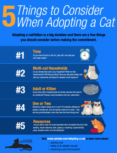 Five things to consider when adopting a cat