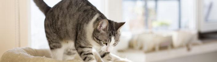 Tabby cat kneading cushion