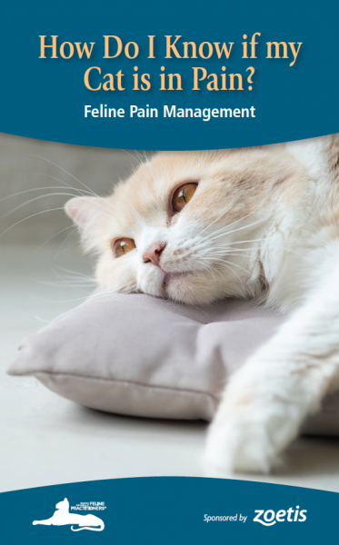 How Do I Know If My Cat Is In Pain Cat Friendly Homes