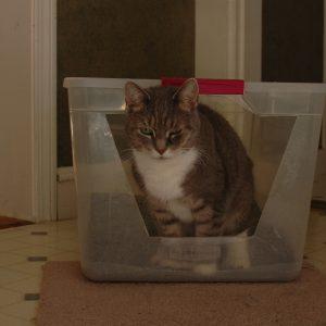 how to litter train an older cat