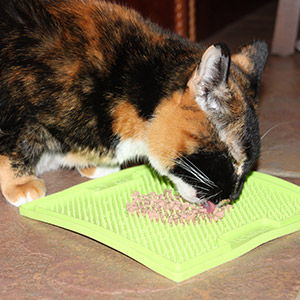 Puzzle Feeder for cat