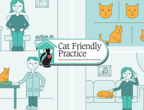4 Reasons to Visit a Cat Friendly Practice®