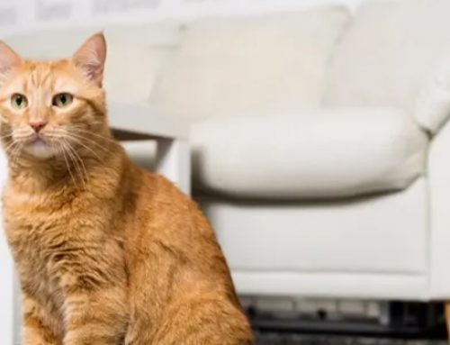 How Many Cats Do You Have in Your Household?