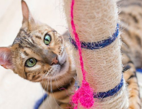 All You Need to Know About Scratching Posts
