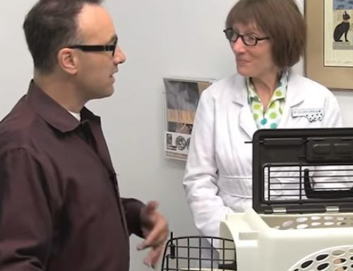 How Cat Friendly Practices® Can Reduce the Stress of Vet Visits